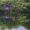 【写真】石神井公園お散歩【三脚】
